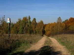 krajobrazy_19