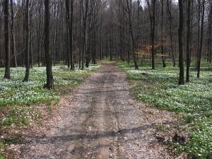 krajobrazy_29